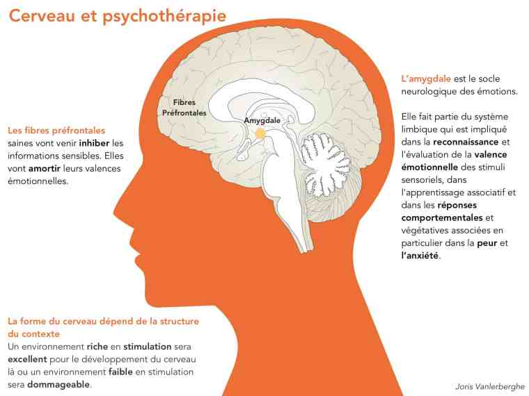 cerveau-et-psychotherapie