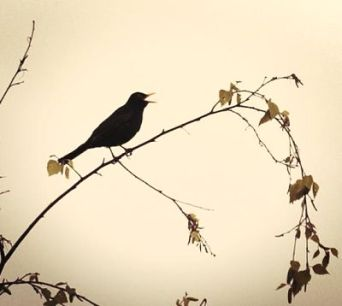 Oiseau qui chante
